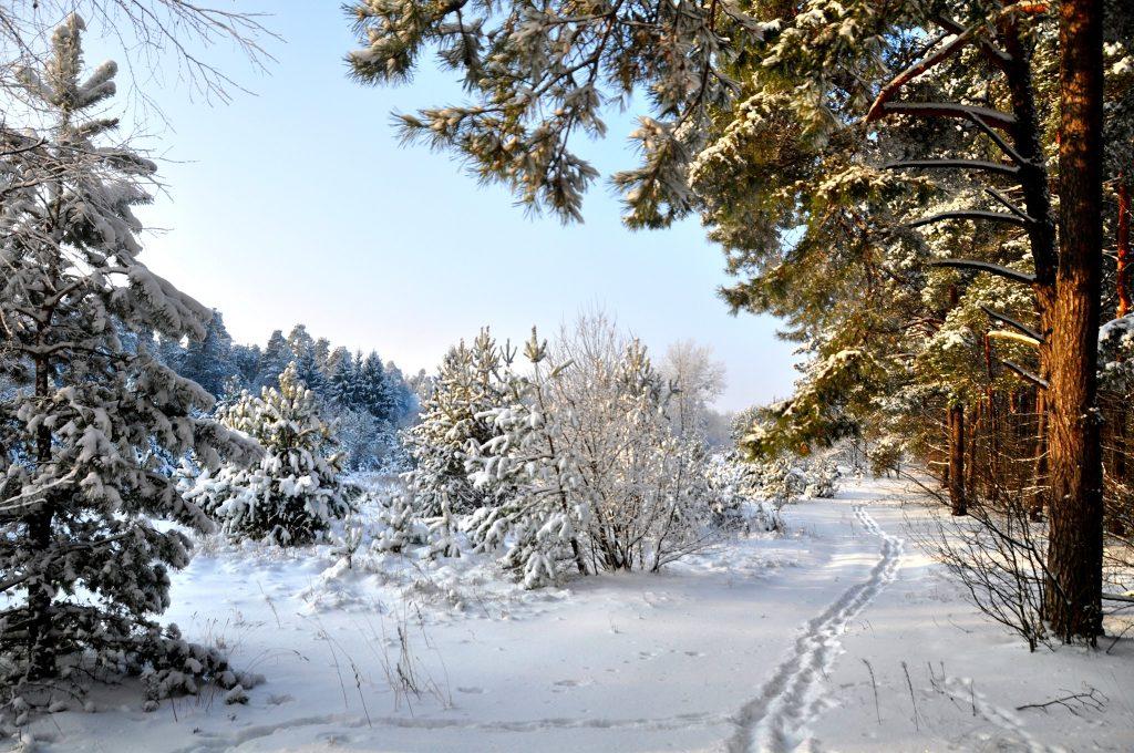Zimowy wypoczynek w Augustowie Villa Skomanda