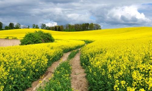 Spring escapades to Augustów